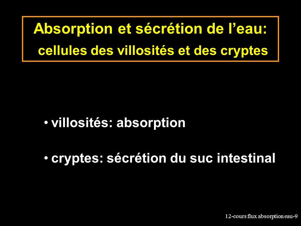 12-cours flux absorption eau-9 Absorption et sécrétion de leau: cellules des villosités et des cryptes villosités: absorption cryptes: sécrétion du su