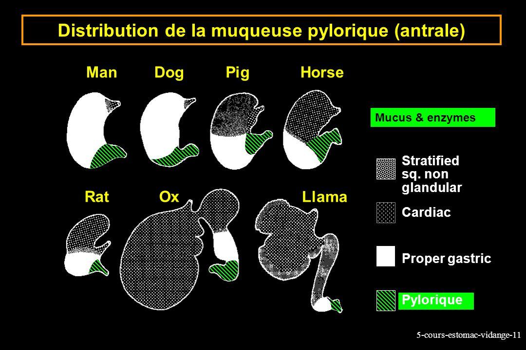 5-cours-estomac-vidange-11 Distribution de la muqueuse pylorique (antrale) ManDogPigHorse RatOx Llama Stratified sq. non glandular Cardiac Proper gast