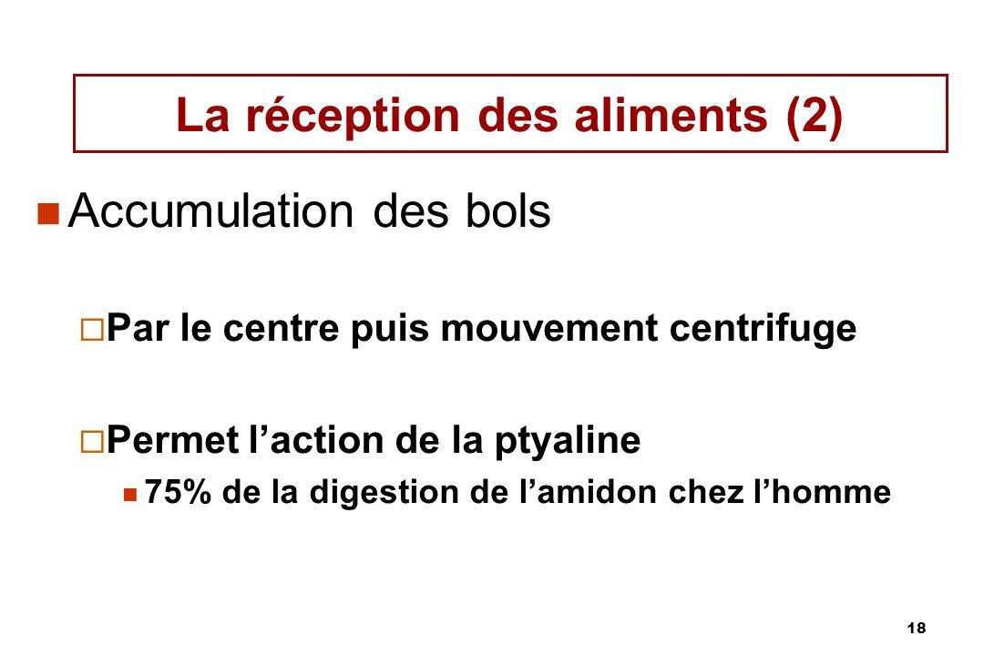 18 La réception des aliments (2) Accumulation des bols Par le centre puis mouvement centrifuge Permet laction de la ptyaline 75% de la digestion de la