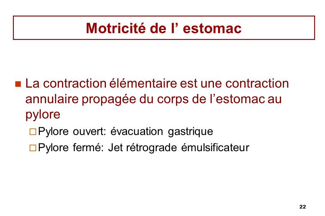 22 Motricité de l estomac La contraction élémentaire est une contraction annulaire propagée du corps de lestomac au pylore Pylore ouvert: évacuation g