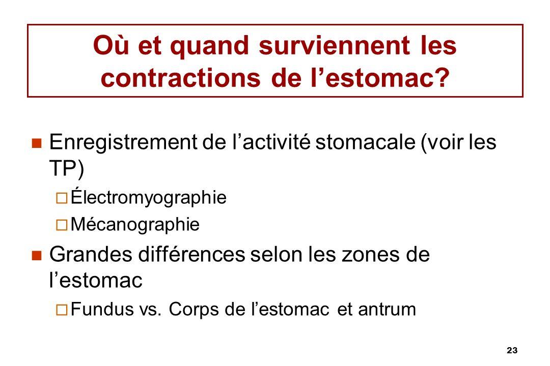 23 Où et quand surviennent les contractions de lestomac? Enregistrement de lactivité stomacale (voir les TP) Électromyographie Mécanographie Grandes d