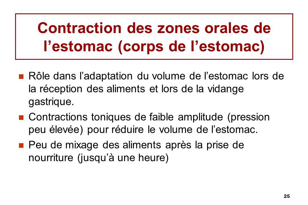 25 Contraction des zones orales de lestomac (corps de lestomac) Rôle dans ladaptation du volume de lestomac lors de la réception des aliments et lors