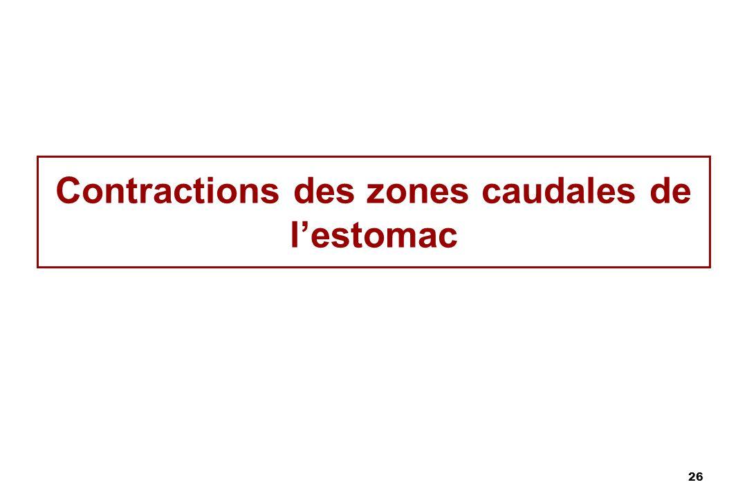 26 Contractions des zones caudales de lestomac