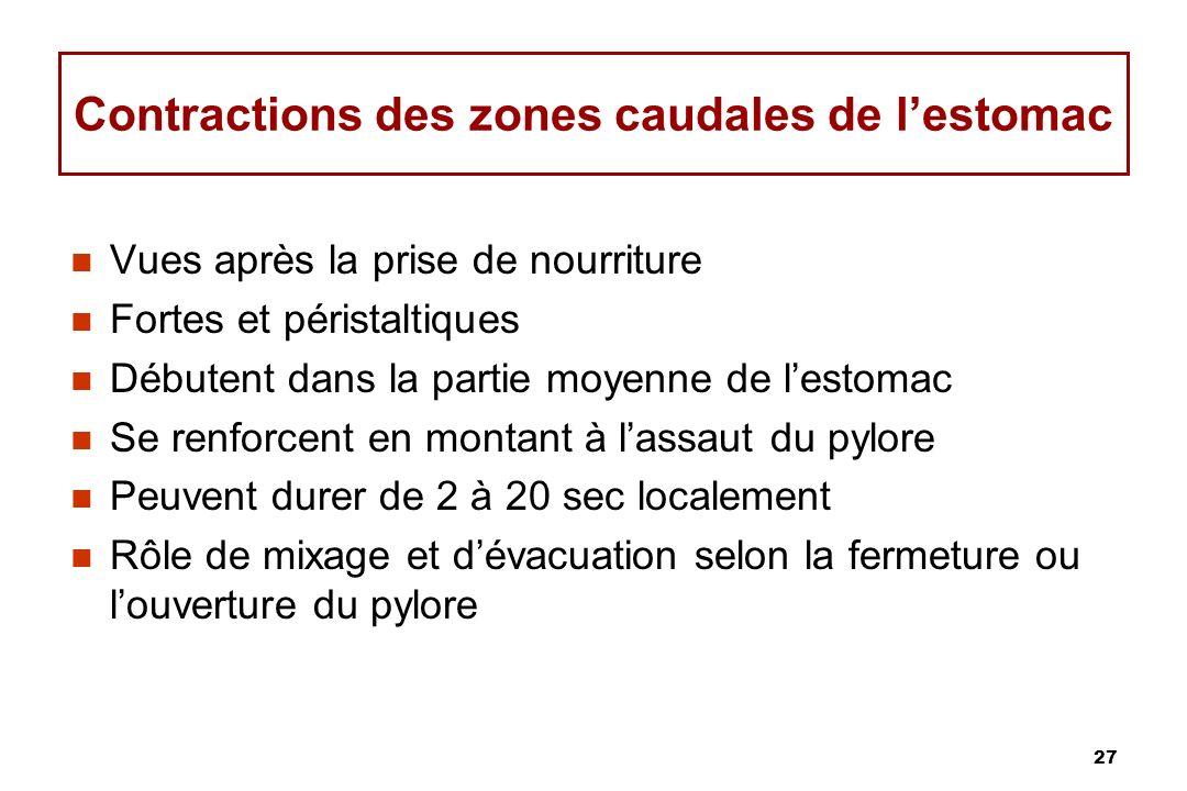 27 Contractions des zones caudales de lestomac Vues après la prise de nourriture Fortes et péristaltiques Débutent dans la partie moyenne de lestomac