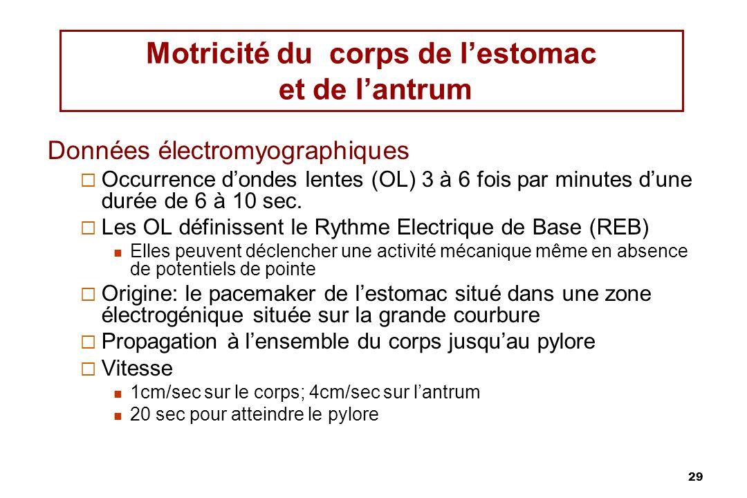29 Motricité du corps de lestomac et de lantrum Données électromyographiques Occurrence dondes lentes (OL) 3 à 6 fois par minutes dune durée de 6 à 10