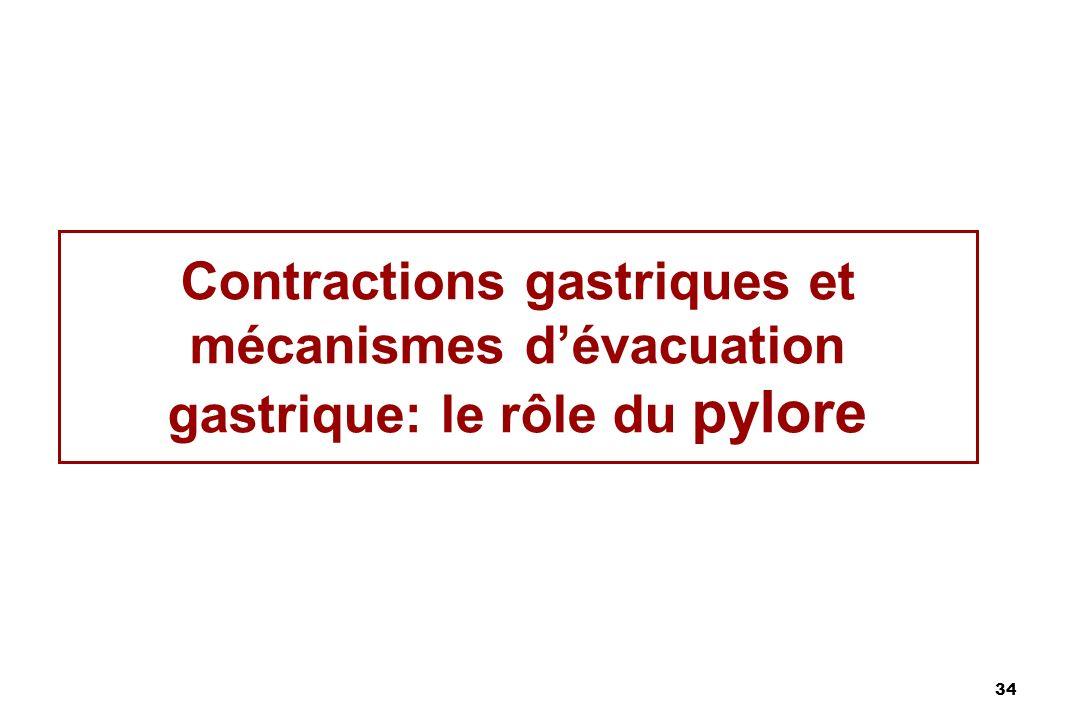 34 Contractions gastriques et mécanismes dévacuation gastrique: le rôle du pylore