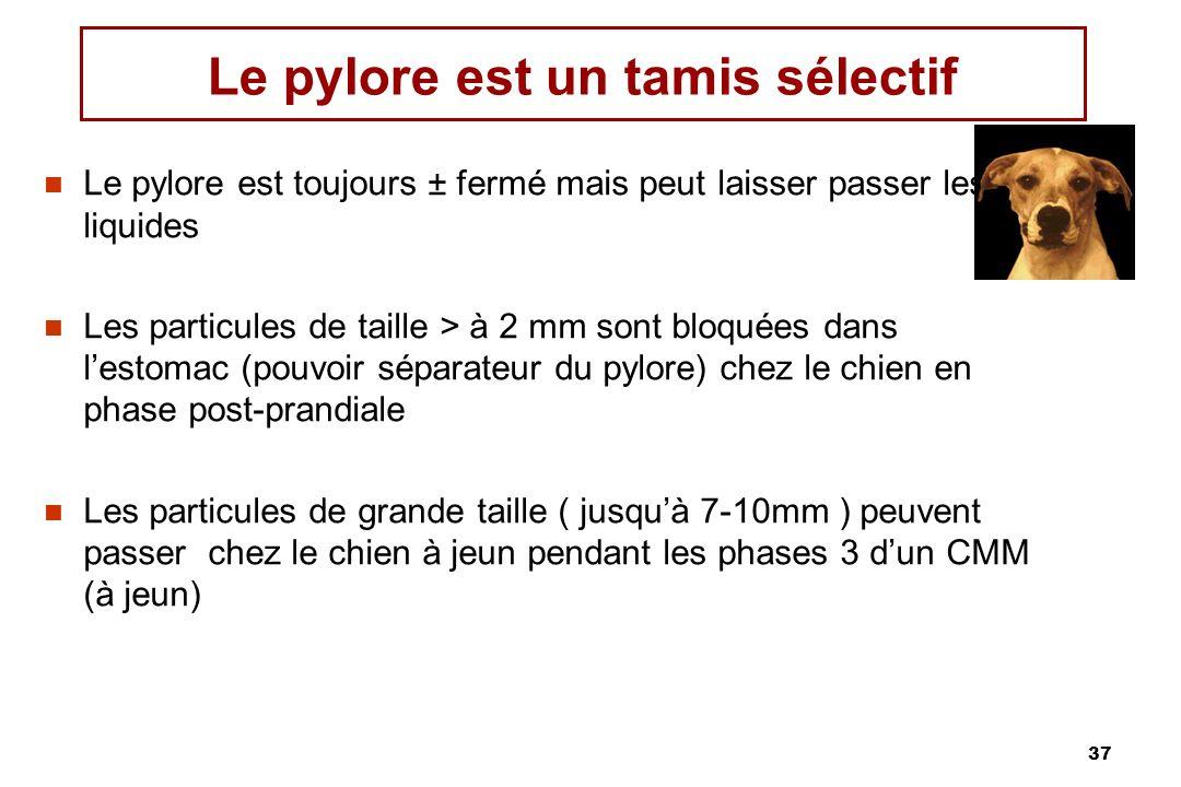 37 Le pylore est un tamis sélectif Le pylore est toujours ± fermé mais peut laisser passer les liquides Les particules de taille > à 2 mm sont bloquée