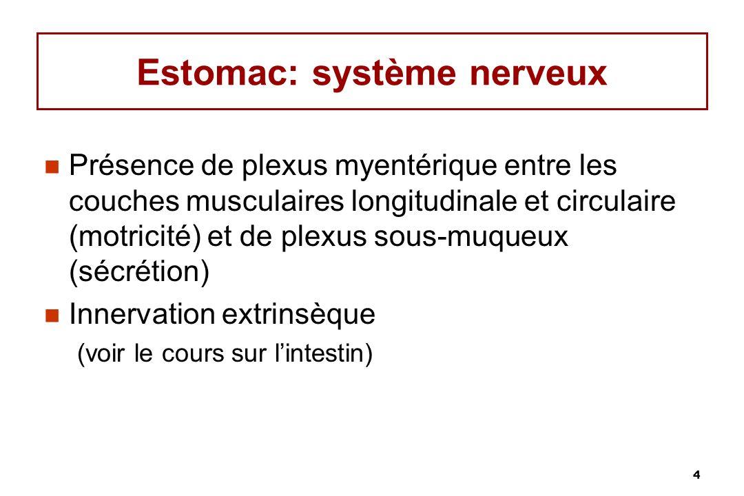 4 Estomac: système nerveux Présence de plexus myentérique entre les couches musculaires longitudinale et circulaire (motricité) et de plexus sous-muqu