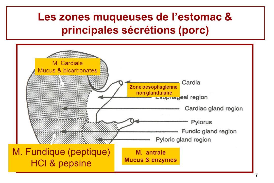 7 Zone oesophagienne non glandulaire M. antrale Mucus & enzymes Les zones muqueuses de lestomac & principales sécrétions (porc) M. Cardiale Mucus & bi
