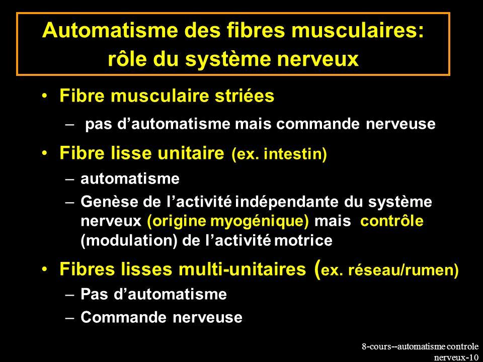 8-cours--automatisme controle nerveux-10 Automatisme des fibres musculaires: rôle du système nerveux Fibre musculaire striées – pas dautomatisme mais