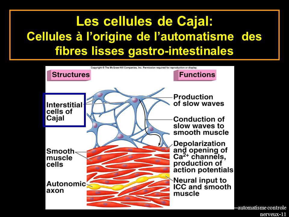 8-cours--automatisme controle nerveux-11 Les cellules de Cajal: Cellules à lorigine de lautomatisme des fibres lisses gastro-intestinales