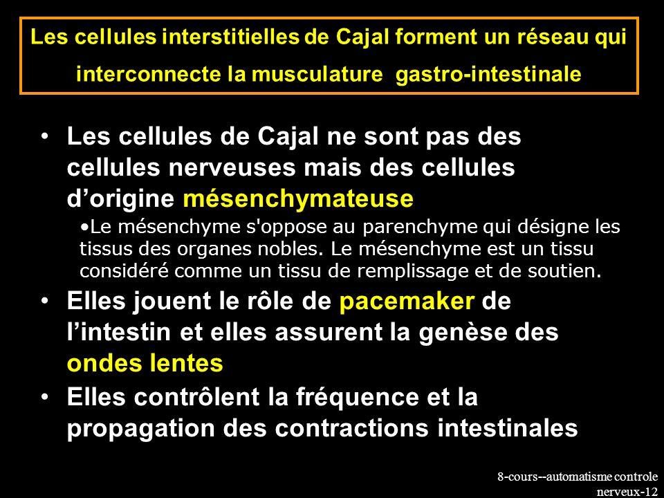 8-cours--automatisme controle nerveux-12 Les cellules interstitielles de Cajal forment un réseau qui interconnecte la musculature gastro-intestinale L