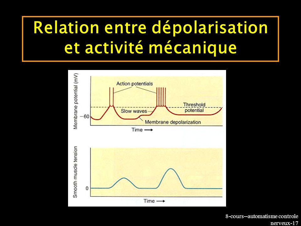 8-cours--automatisme controle nerveux-17 Relation entre dépolarisation et activité mécanique