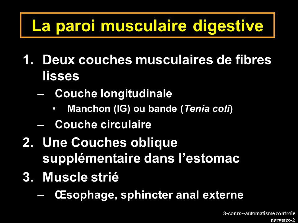 8-cours--automatisme controle nerveux-2 La paroi musculaire digestive 1.Deux couches musculaires de fibres lisses –Couche longitudinale Manchon (IG) o