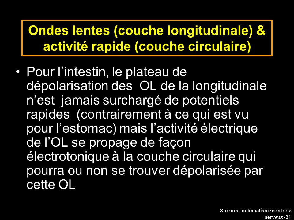 8-cours--automatisme controle nerveux-21 Ondes lentes (couche longitudinale) & activité rapide (couche circulaire) Pour lintestin, le plateau de dépol