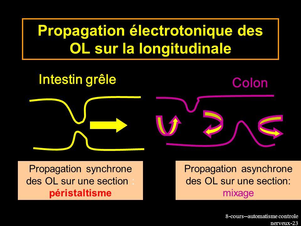 8-cours--automatisme controle nerveux-23 Propagation électrotonique des OL sur la longitudinale Intestin grêle Colon Propagation synchrone des OL sur