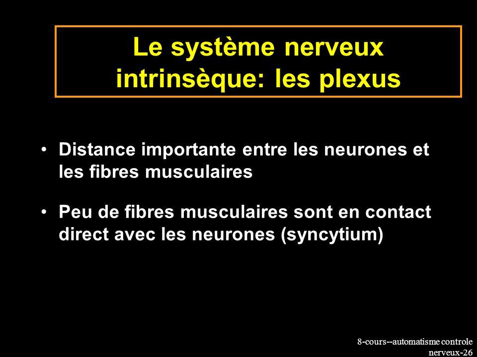 8-cours--automatisme controle nerveux-26 Le système nerveux intrinsèque: les plexus Distance importante entre les neurones et les fibres musculaires P