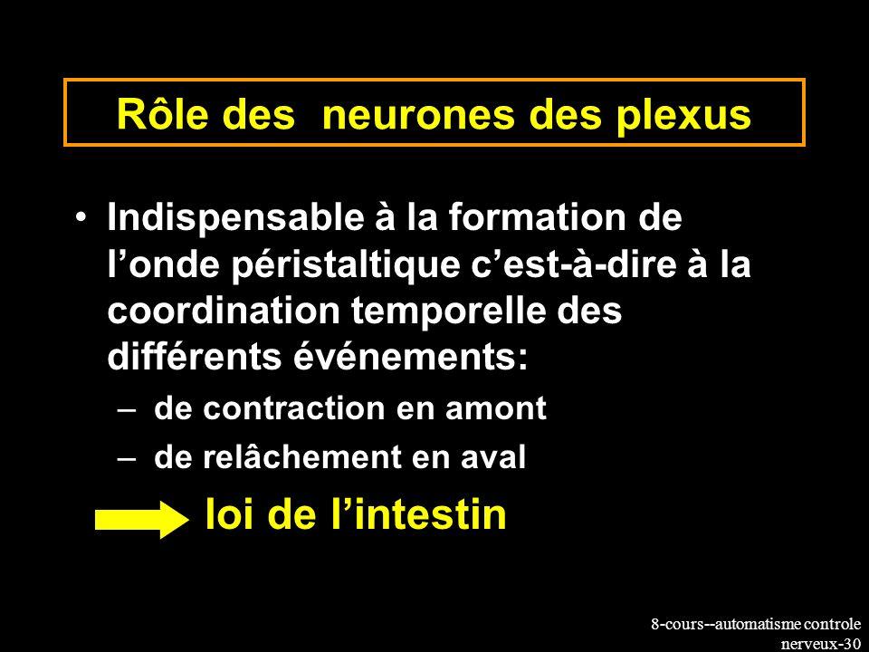8-cours--automatisme controle nerveux-30 Rôle des neurones des plexus Indispensable à la formation de londe péristaltique cest-à-dire à la coordinatio