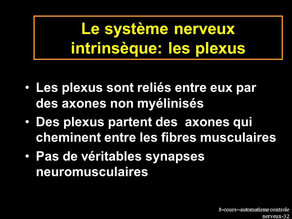 8-cours--automatisme controle nerveux-32 Le système nerveux intrinsèque: les plexus Les plexus sont reliés entre eux par des axones non myélinisés Des