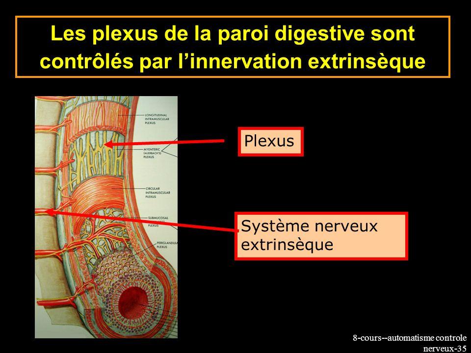 8-cours--automatisme controle nerveux-35 Les plexus de la paroi digestive sont contrôlés par linnervation extrinsèque Plexus Système nerveux extrinsèq