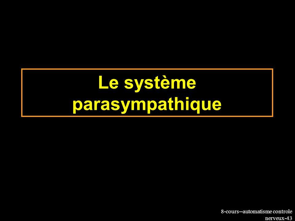 8-cours--automatisme controle nerveux-43 Le système parasympathique