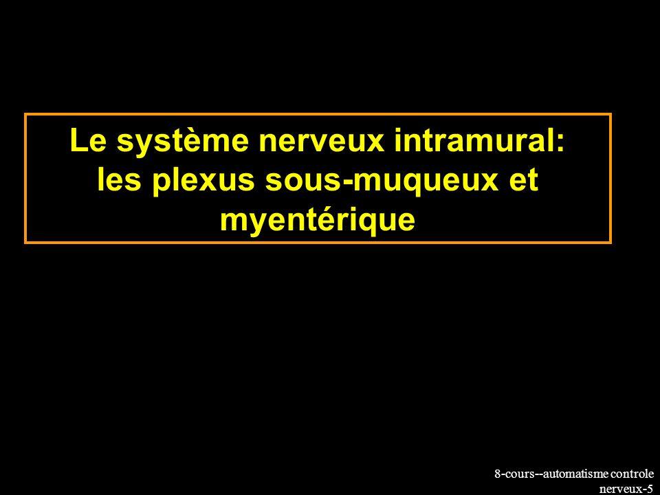 8-cours--automatisme controle nerveux-36 Innervation extrinsèque et couplage aux plexus Plexus myentérique Plexus sous-muqueux