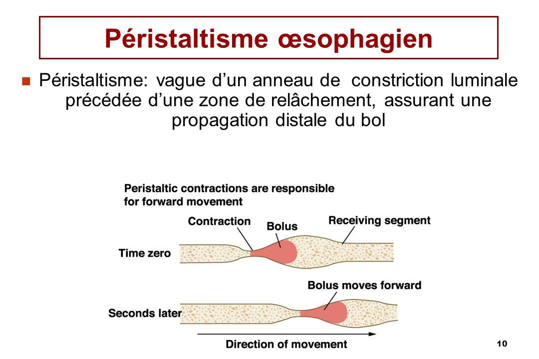 10 Péristaltisme œsophagien Péristaltisme: vague dun anneau de constriction luminale précédée dune zone de relâchement, assurant une propagation dista