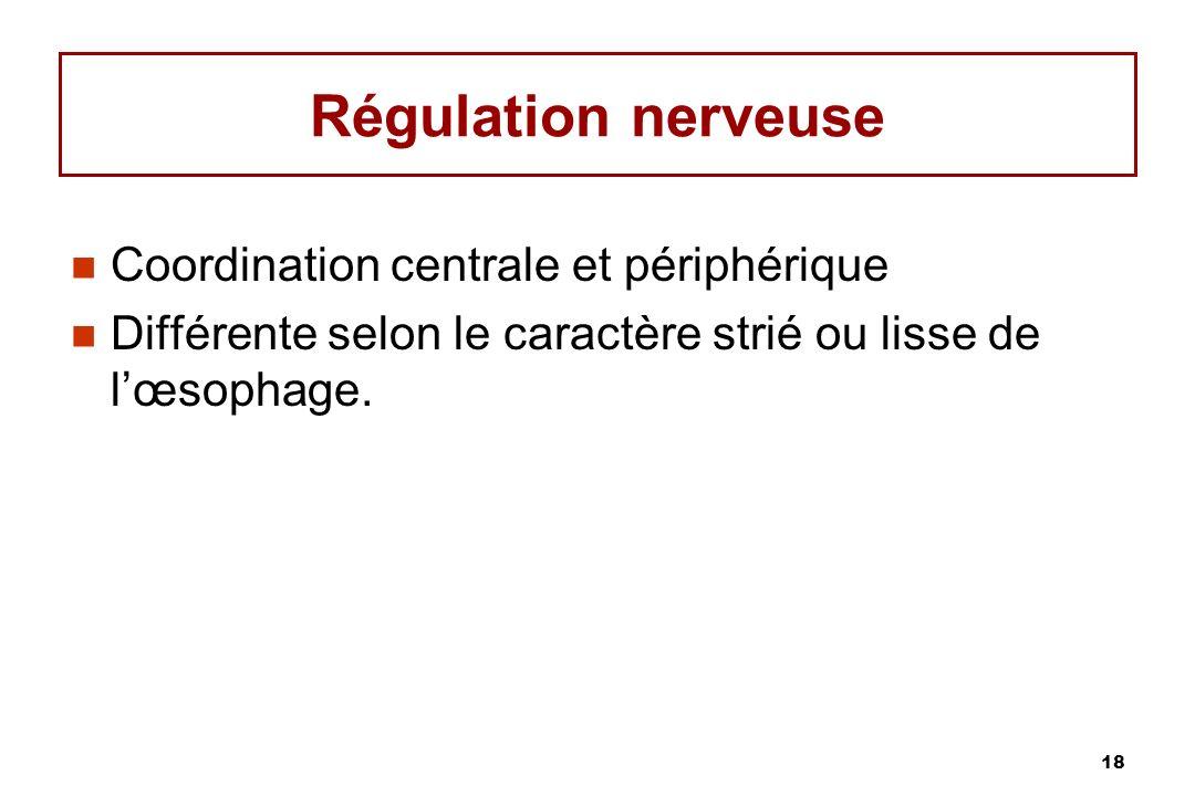 18 Régulation nerveuse Coordination centrale et périphérique Différente selon le caractère strié ou lisse de lœsophage.