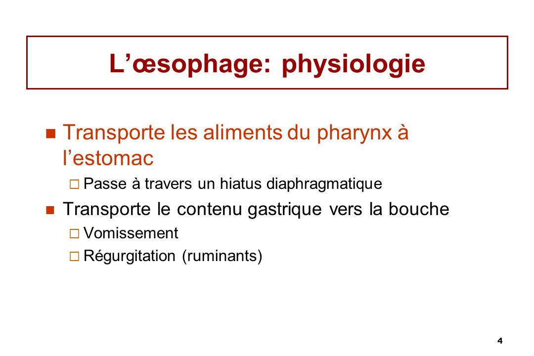 5 Œsophage: un tube musculaire creux extensible Longitudinale Circulaire Sous-muqueuse lâche formant des replis