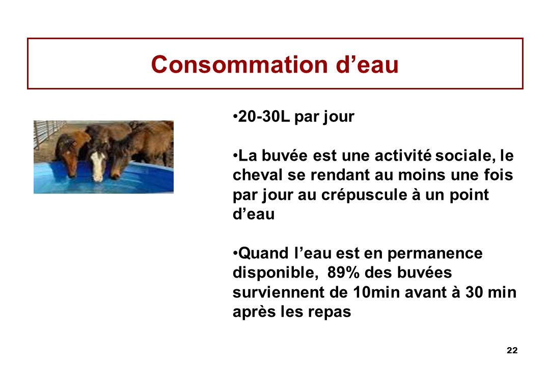 22 Consommation deau 20-30L par jour La buvée est une activité sociale, le cheval se rendant au moins une fois par jour au crépuscule à un point deau Quand leau est en permanence disponible, 89% des buvées surviennent de 10min avant à 30 min après les repas