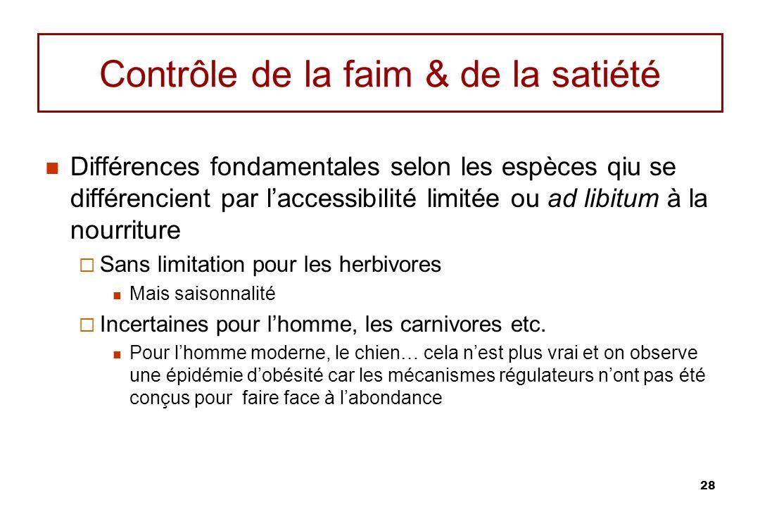 28 Contrôle de la faim & de la satiété Différences fondamentales selon les espèces qiu se différencient par laccessibilité limitée ou ad libitum à la