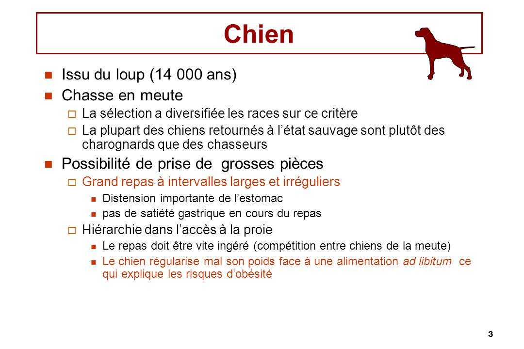 3 Chien Issu du loup (14 000 ans) Chasse en meute La sélection a diversifiée les races sur ce critère La plupart des chiens retournés à létat sauvage