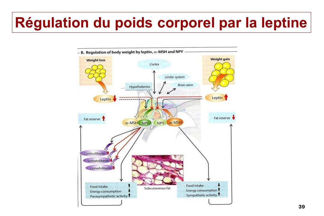 39 Régulation du poids corporel par la leptine