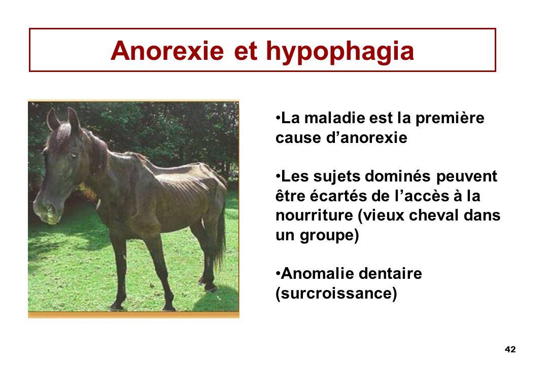 42 Anorexie et hypophagia La maladie est la première cause danorexie Les sujets dominés peuvent être écartés de laccès à la nourriture (vieux cheval dans un groupe) Anomalie dentaire (surcroissance)