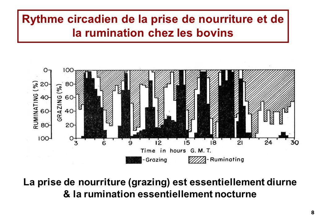8 Rythme circadien de la prise de nourriture et de la rumination chez les bovins La prise de nourriture (grazing) est essentiellement diurne & la rumination essentiellement nocturne