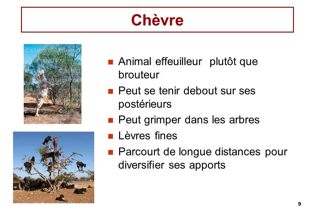 9 Chèvre Animal effeuilleur plutôt que brouteur Peut se tenir debout sur ses postérieurs Peut grimper dans les arbres Lèvres fines Parcourt de longue
