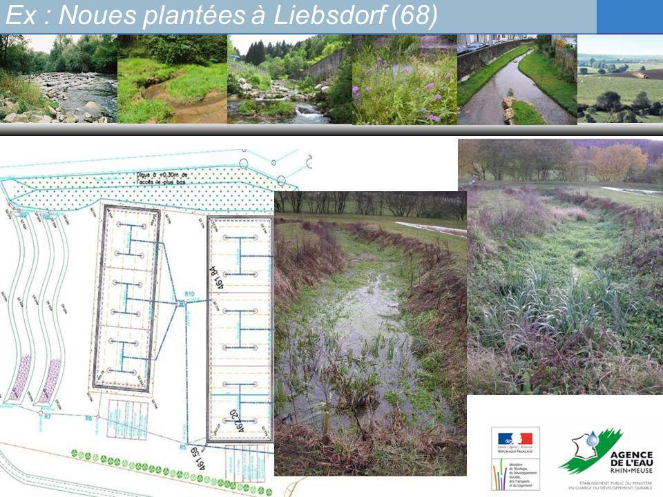 Ex : Noues plantées à Liebsdorf (68)