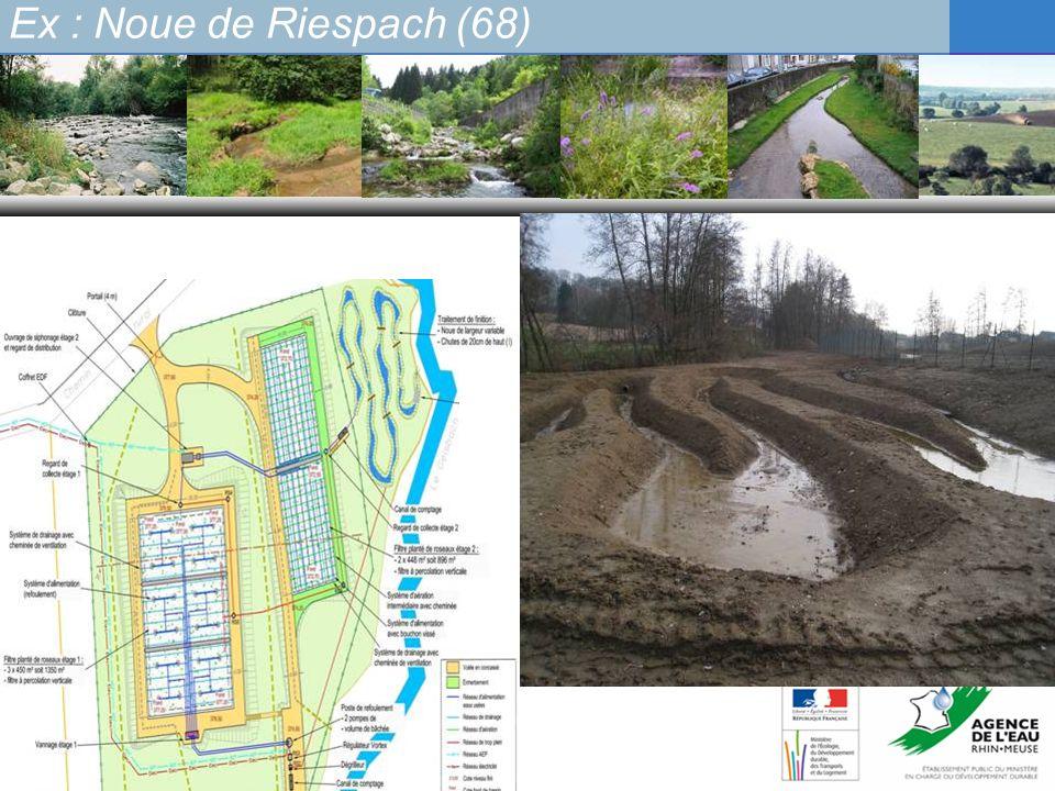 Ex : Noue de Riespach (68)