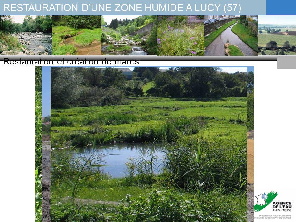 RESTAURATION DUNE ZONE HUMIDE A LUCY (57) Restauration et création de mares