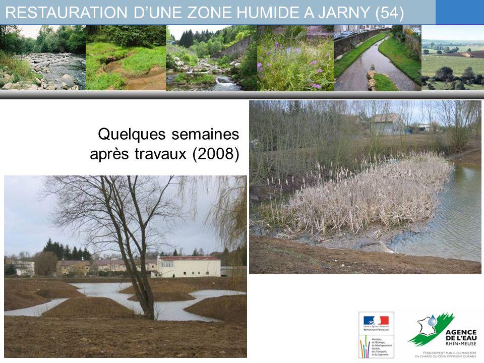 RESTAURATION DUNE ZONE HUMIDE A JARNY (54) Quelques semaines après travaux (2008)