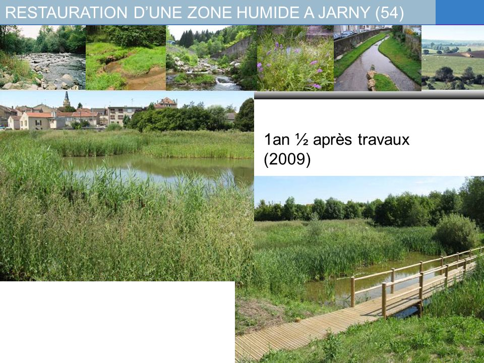 RESTAURATION DUNE ZONE HUMIDE A JARNY (54) 1an ½ après travaux (2009)