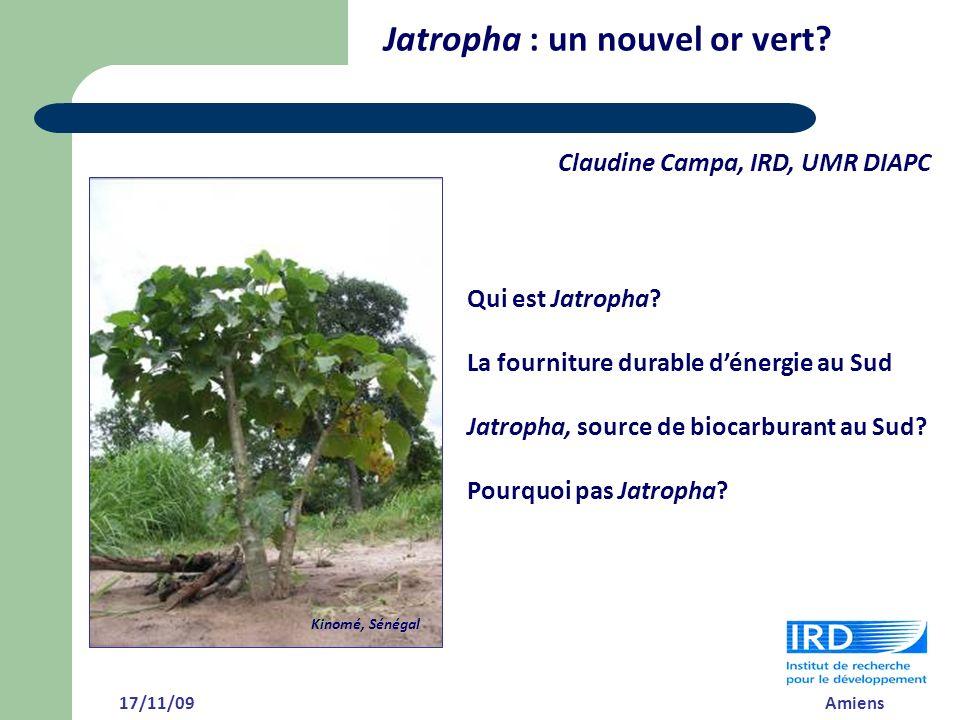Qui est Jatropha? La fourniture durable dénergie au Sud Jatropha, source de biocarburant au Sud? Pourquoi pas Jatropha? Jatropha : un nouvel or vert?