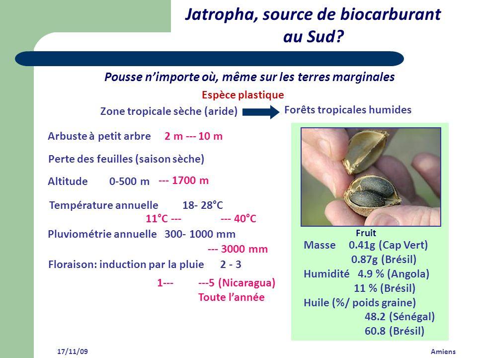 Jatropha, source de biocarburant au Sud? 17/11/09 Amiens Pousse nimporte où, même sur les terres marginales ---5 (Nicaragua) Toute lannée 1--- Florais