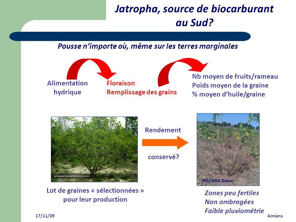 Jatropha, source de biocarburant au Sud? 17/11/09 Amiens Pousse nimporte où, même sur les terres marginales Alimentation hydrique Floraison Remplissag