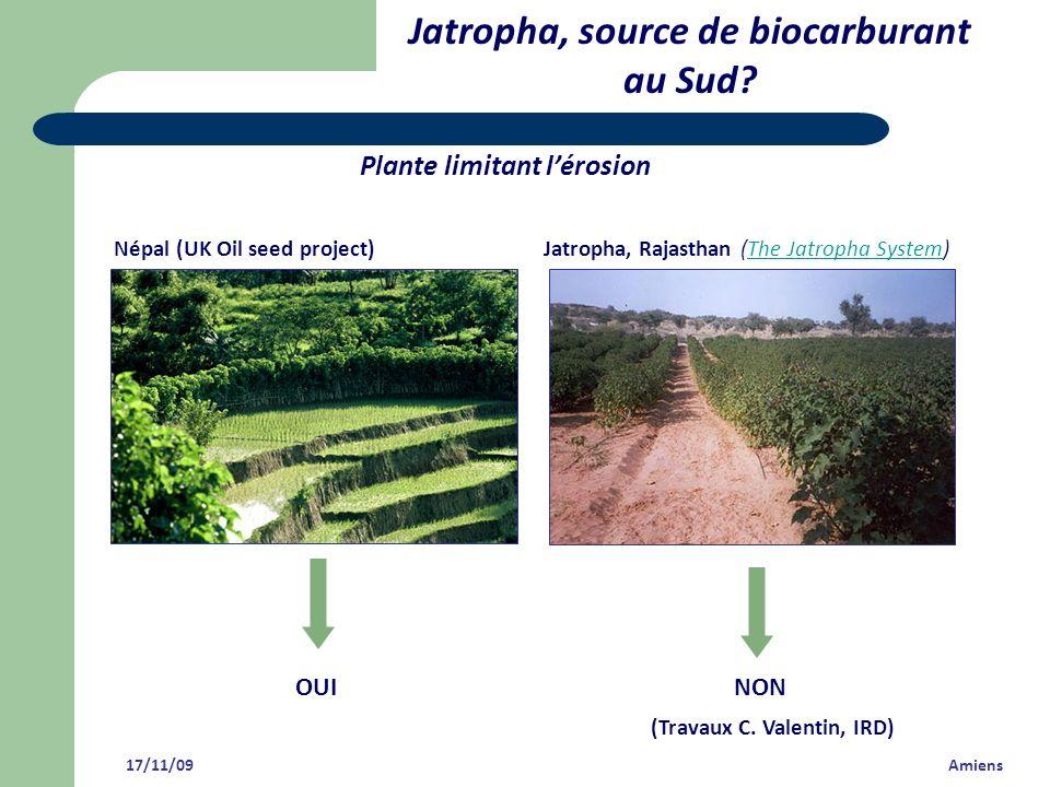 Jatropha, source de biocarburant au Sud? Plante limitant lérosion Népal (UK Oil seed project) Jatropha, Rajasthan (The Jatropha System)The Jatropha Sy