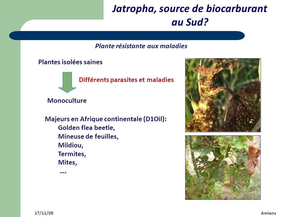 Jatropha, source de biocarburant au Sud? 17/11/09 Amiens Plante résistante aux maladies Majeurs en Afrique continentale (D1Oil): Golden flea beetle, M