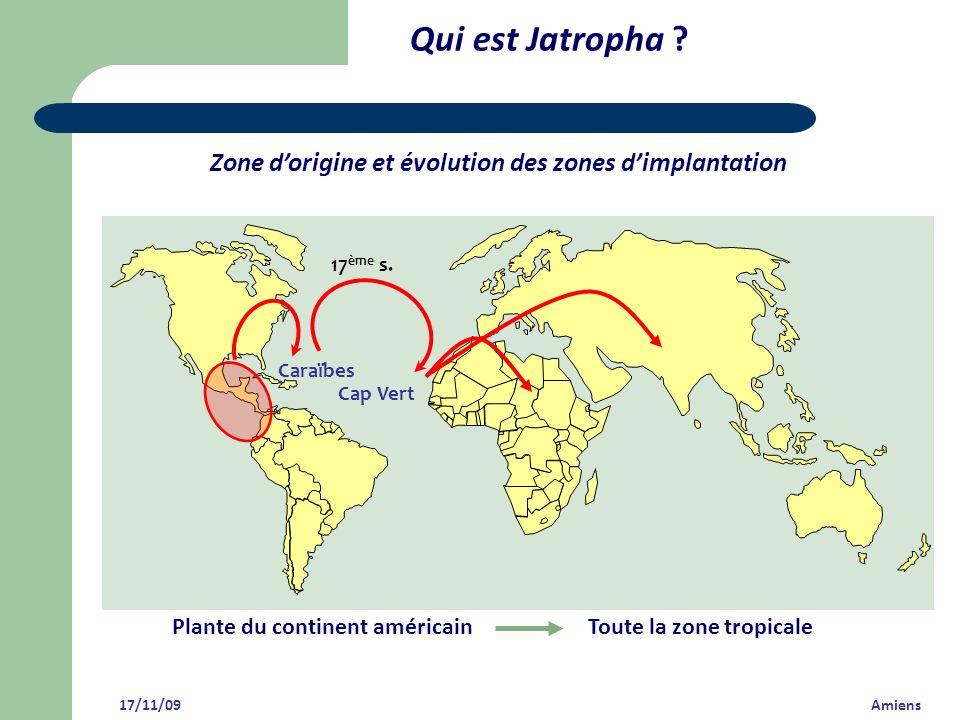 Qui est Jatropha ? 17/11/09 Amiens Caraïbes Cap Vert 17 ème s. Zone dorigine et évolution des zones dimplantation Plante du continent américainToute l