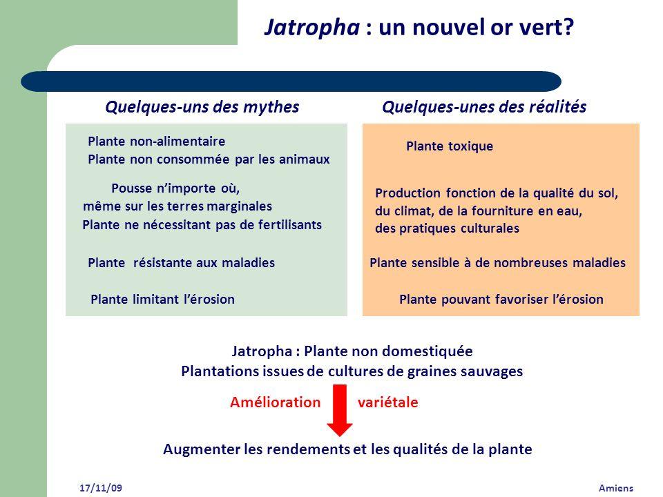 17/11/09 Amiens Jatropha : un nouvel or vert? Plante toxique Plante non-alimentaire Plante non consommée par les animaux Plante sensible à de nombreus