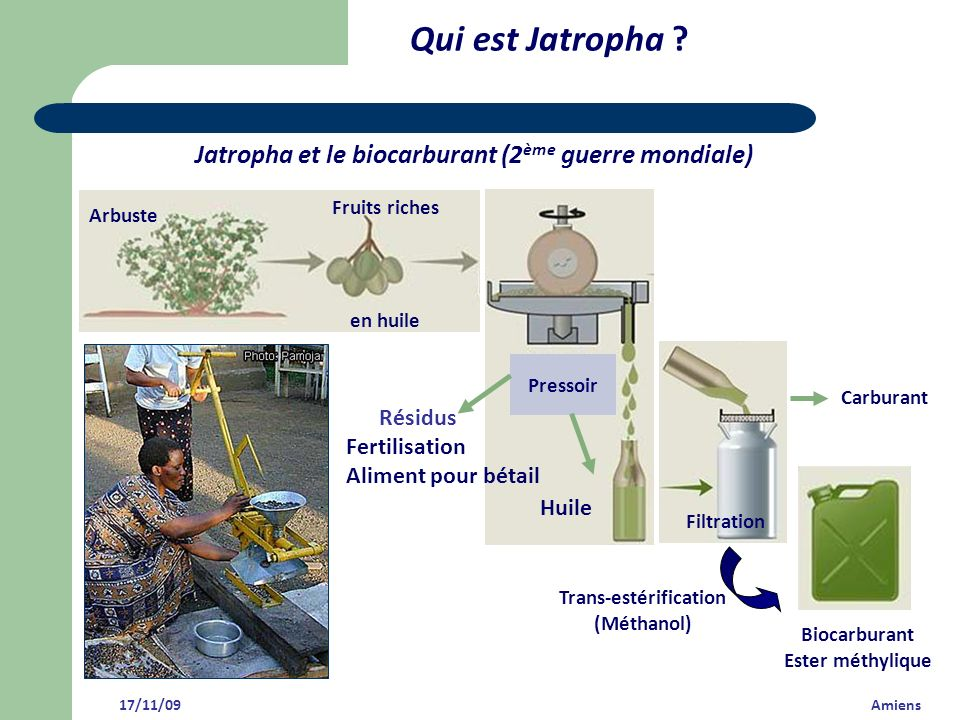 Qui est Jatropha ? 17/11/09 Amiens Jatropha et le biocarburant (2 ème guerre mondiale) Arbuste Fruits riches en huile Trans-estérification (Méthanol)