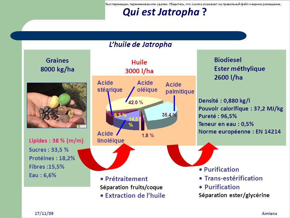 Qui est Jatropha ? 17/11/09 Amiens Lhuile de Jatropha Graines 8000 kg/ha Lipides : 38 % (m/m) Sucres : 33,5 % Protéines : 18,2% Fibres :15,5% Eau : 6,